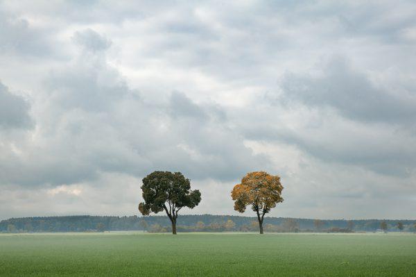 Landschaftsfotografie Allgäu Ostallgäu B12 Bäume Baum Herbstlaub Kees van Surksum Fotograf