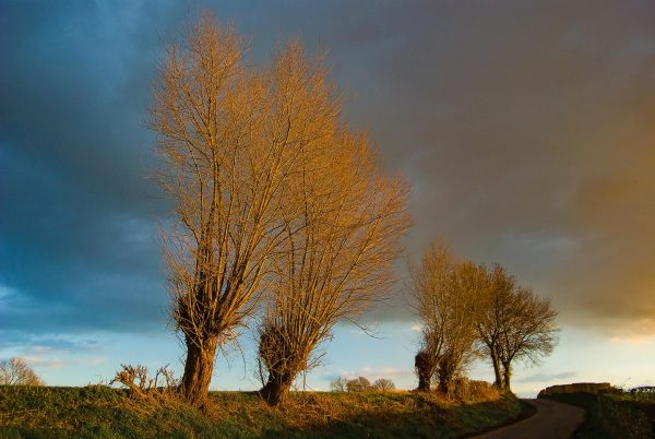 Fotograf Allgäu Fine Art Landschaftsfotografie Belgien Niederlanden Weide in der Abendsonne Fotografie Kees van Surksum