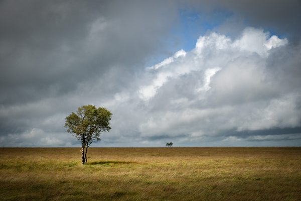 Landschaftsfotografie, Landschaften Belgien Hochmoor Hohes Venn Hautes Fagnes einsamer Baum in Moorlandschaft nahe Baraque Michel Fotograf Kees van Surksum Kaufbeuren München Allgäu