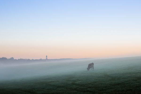 Landschaftsfotografie Landschaften Bayern, Allgäu Kuh im Nebel vor Hintergrund mit Kirche im Morgenlicht, Fotograf Kees van Surksum Altusried bei Kempten im Oberallgäu