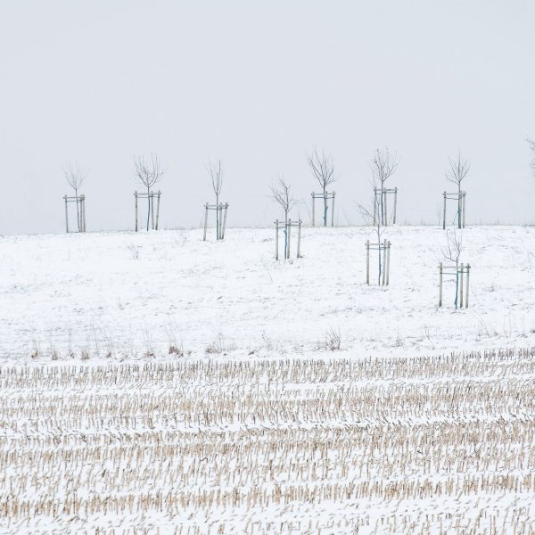 Fine Art Landschaftsfotografie Landschaften Deutschland Unterallgäu Schnee im Winter auf einem Acker und Streuobstwiese Fotograf Kees van Surksum Altsuried, Kaufbeuren, München, bayerisches Schwaben